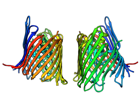 Structure of usher pore