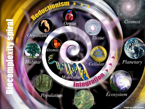 http://freesci.files.wordpress.com/2009/12/biocomplexity_spiral.jpg?w=645